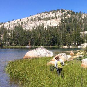 Alexa Lindauer conducting a frog survey at Upper Mattie Lake, Yosemite National Park, CA.